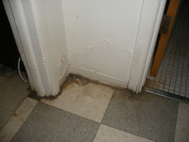 If You See Discoloration On Walls Or Baseboard Near The Floor Especially In Bat Areas Corners Of Exterior Wall Closets This Could Be Mold